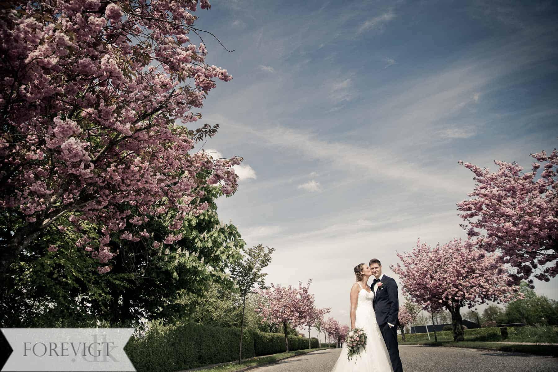 Klitrosen bryllup med vielse i Hammer Kirke