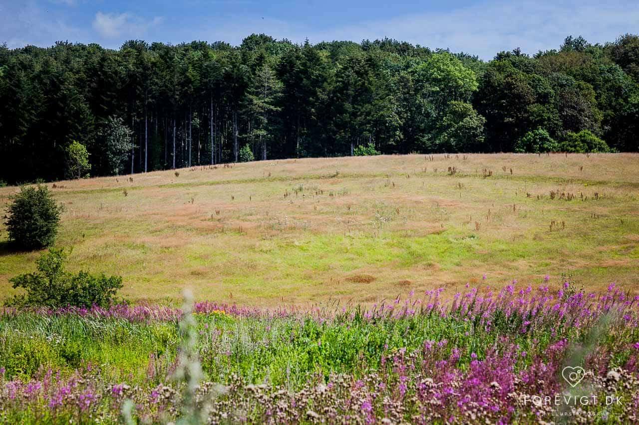 naturskønne Vejle Ådal